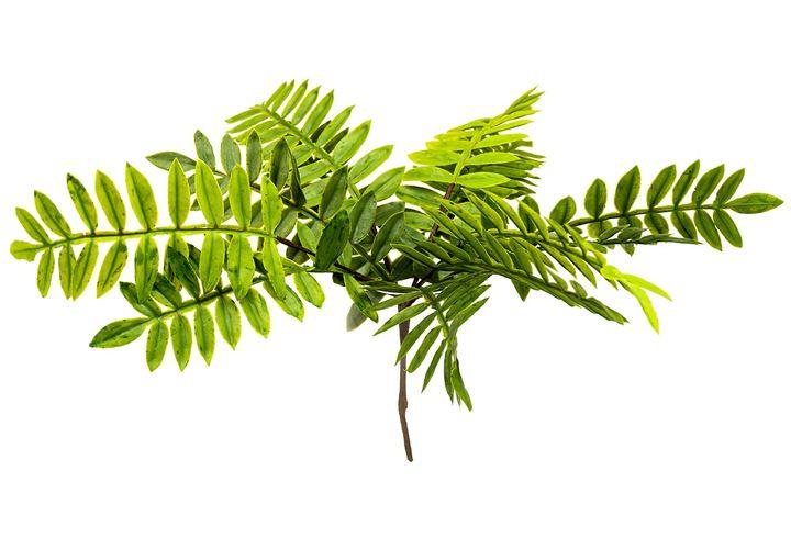PLANTA-VERDE